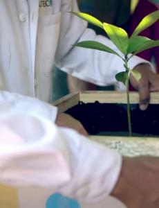 utec-plant-lamp
